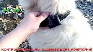 Убежала собака как быстро найти собаку GPS маяк ГЛОНАСС мониторинг животных