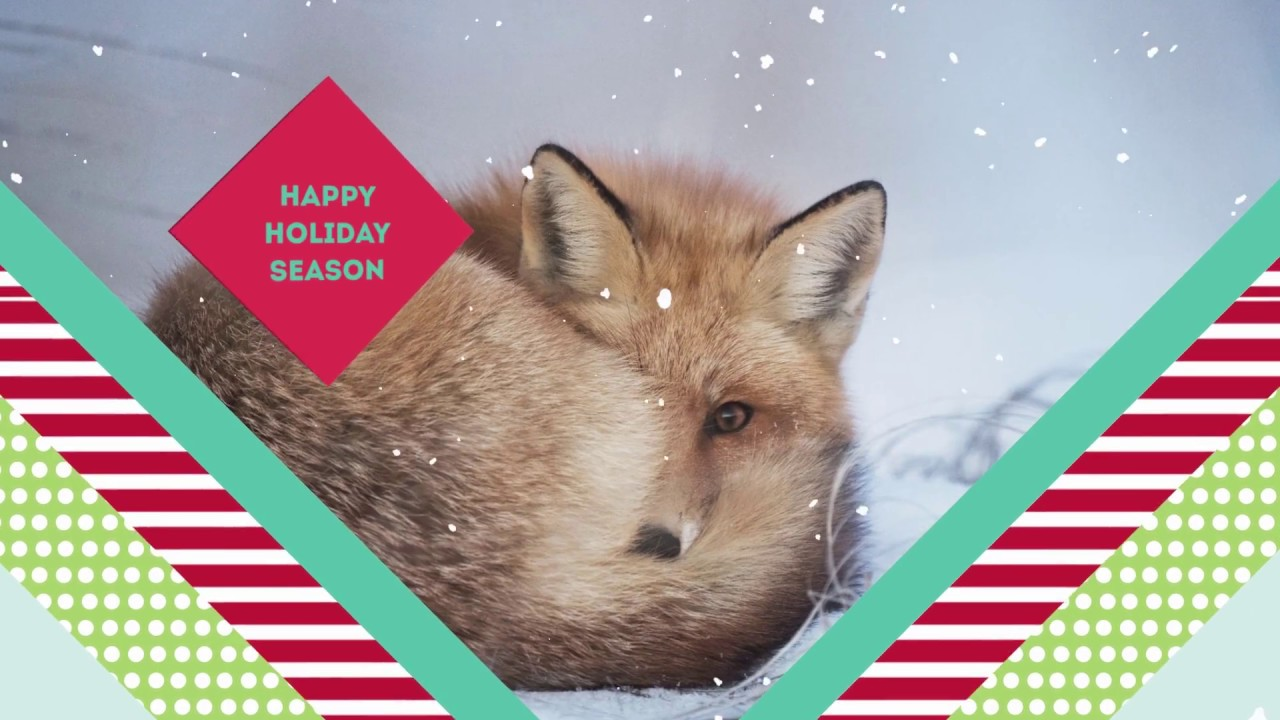 Christmas Card Video Template