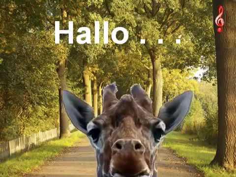 Giraffe Hallo Youtube