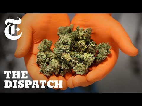 Jason Carr - Canada Has Pot Shortage After Legalization