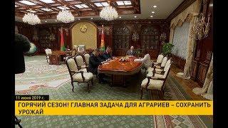 Лукашенко об урожае: Надо по-хозяйски посмотреть. Ни в коем случае ничего не потерять