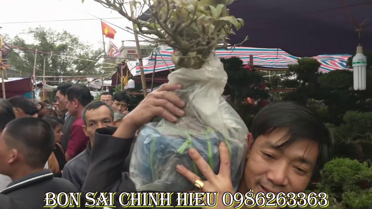 Chợ Viềng Nam định 2019: 250 Ngàn Cây Sung Bon Sai Sung Sướng Cả Năm Tại Chợ Viềng