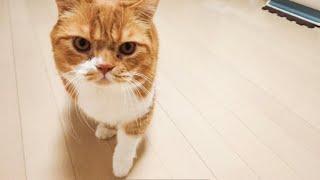 可愛い 猫