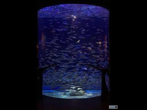 Fish world Aquarium |Dubai | The lost chamber |Indian|Jumeira|