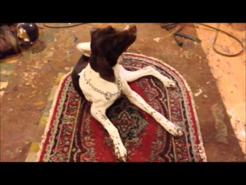 Peter Caine : Teach 'Place' for hyperactive dog