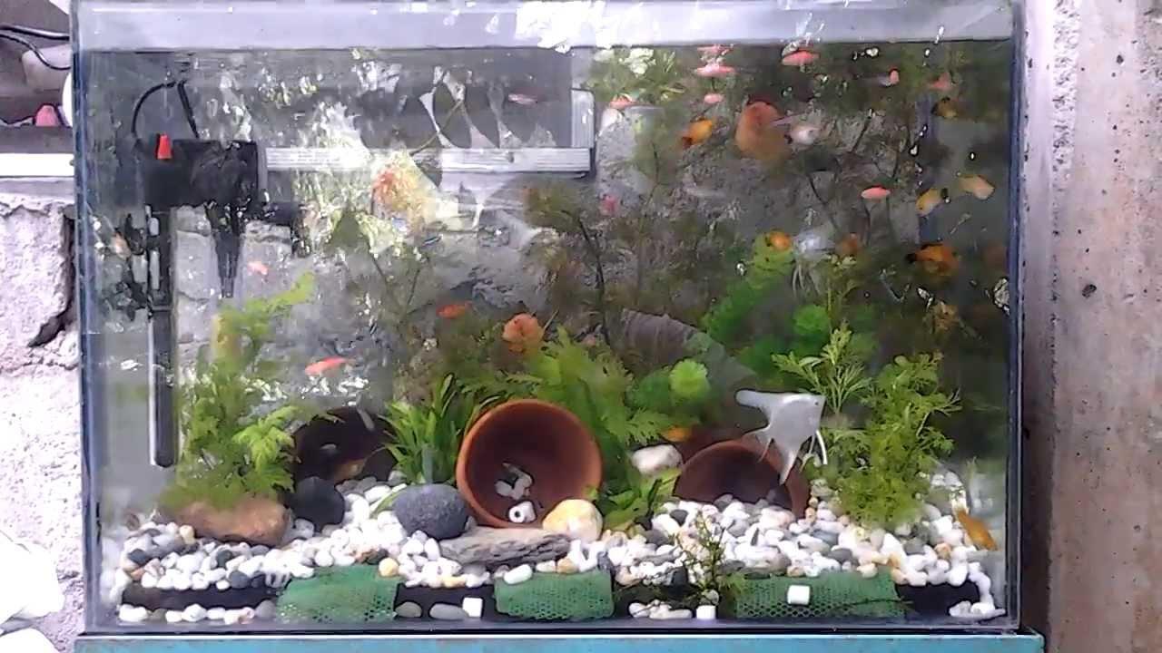 Attractive Outdoor Aquarium