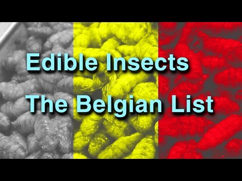Edible insects in Europa - The Belgian List