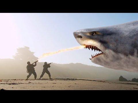 TOP 10 BIGGEST SHARKS Ever !