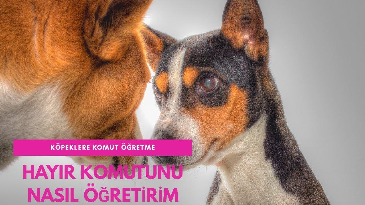 Köpeklere Bırak Komutu Nasıl Öğretilir