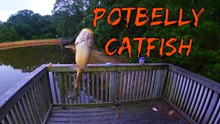 Catching Potbelly Catfish in the Rain