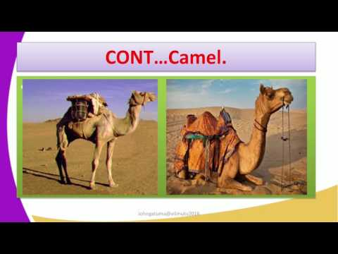 Form2 History Lesson11 DEVELOPMENT OF TRANSPORT AND COMMUNICATION ANIMAL TRANSPORT