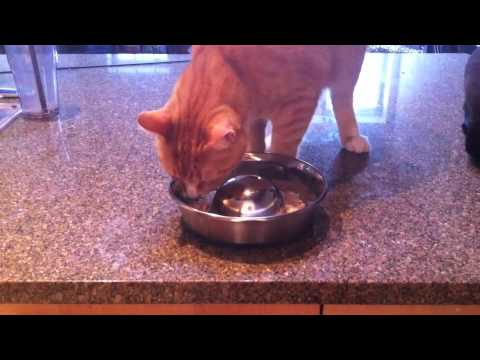 Cat Food Ratings >> product review - durapet slow feed bowl - YouTube