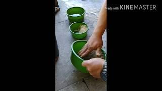 떡밥개는법 (집어제-아투아텍2,아쿠아김밥 베이스)
