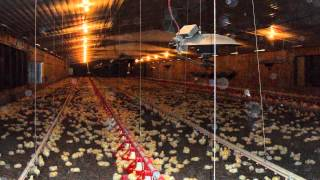 Poultry Farm For Sale In Mansfield, Arkansas