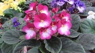 видео магазин растений комнатных