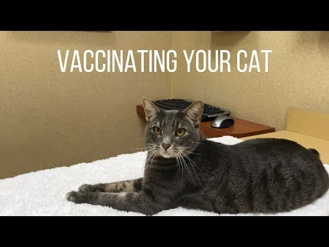 Cat Vaccinations Everything You Should Know