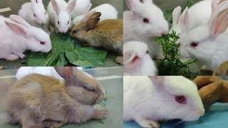Rabbits | Rabbit Keeping | Rabbit Care | Rabbit Food