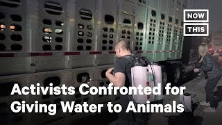Activists Confronted for Trying to Give Water to Animals | NowThis