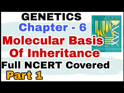 Ch-6 Molecular Basis of Inheritance GENETICS Full NCERT Explanation for Boards and NEET 2019 Part 1 thumbnail