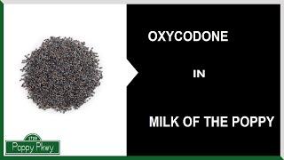 "Oxycodone   Kitchen Chemistry (WARNING: ""Dangerous Jokes"")"