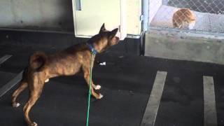 イオン琉球名護店2階駐車場の端に、網で囲われた中にネコがいた。RIN(...