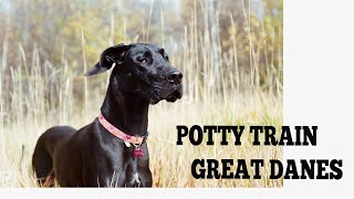How To Easily Potty Train Great Danes