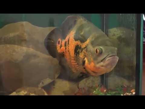 Мой заброшенный аквариум на 100 литров