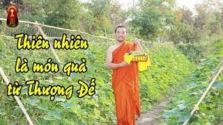 Thiên Nhiên Là Món Quà Từ Thượng Đế     Master Ruma Official