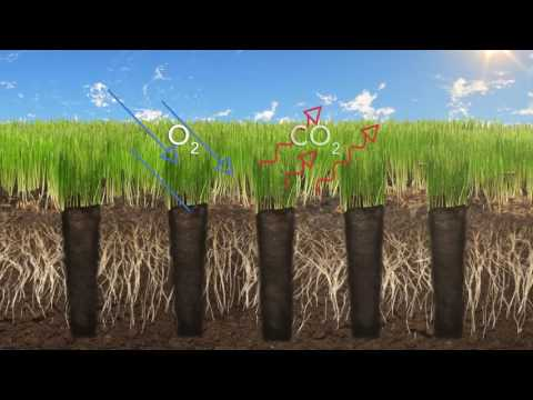 How Often Should You Aerate Your Lawn Outdoor Ideas