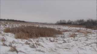 Охота на оленя рогача Канада