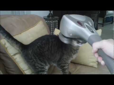 CAT LOVES THE ELECTRIC MASSAGER!!! Garbo Kitty Gets the Pulsating Massage Treatment