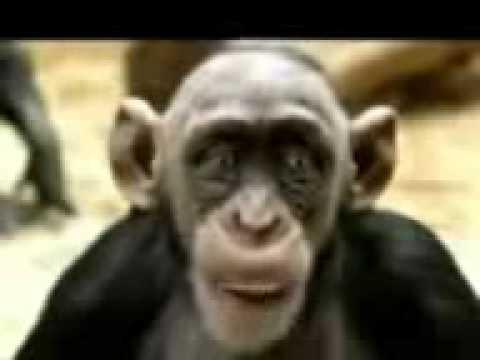 Download 68+ Gambar Monyet Lucu Bahasa Sunda Terlucu