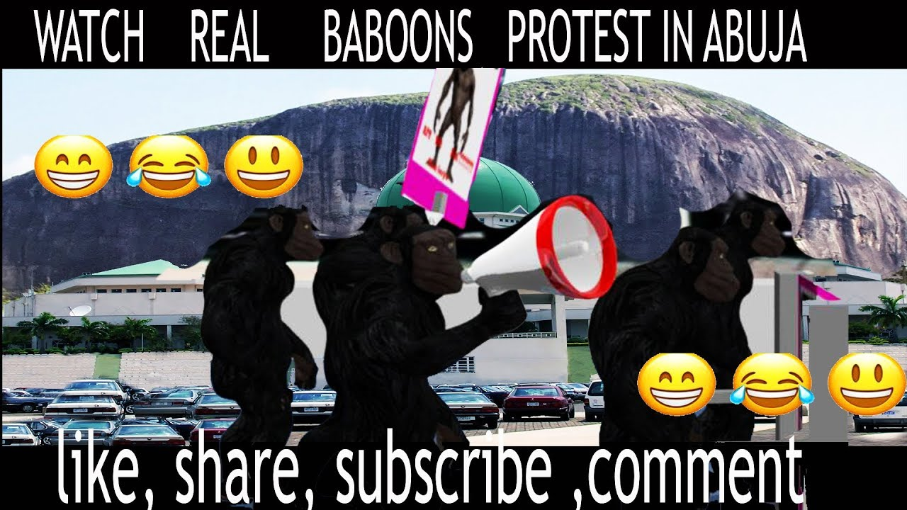 BIAFRA NEWS TODAY: REAL BABOONS AND MONKIES IN ABUJA PROTESTING FOR ARREST  OF NNAMDI KANU