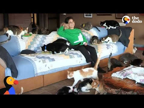 MOST EPIC CAT LADY: Woman Shares Her Home With Hundreds Of Rescue Cats | The Dodo