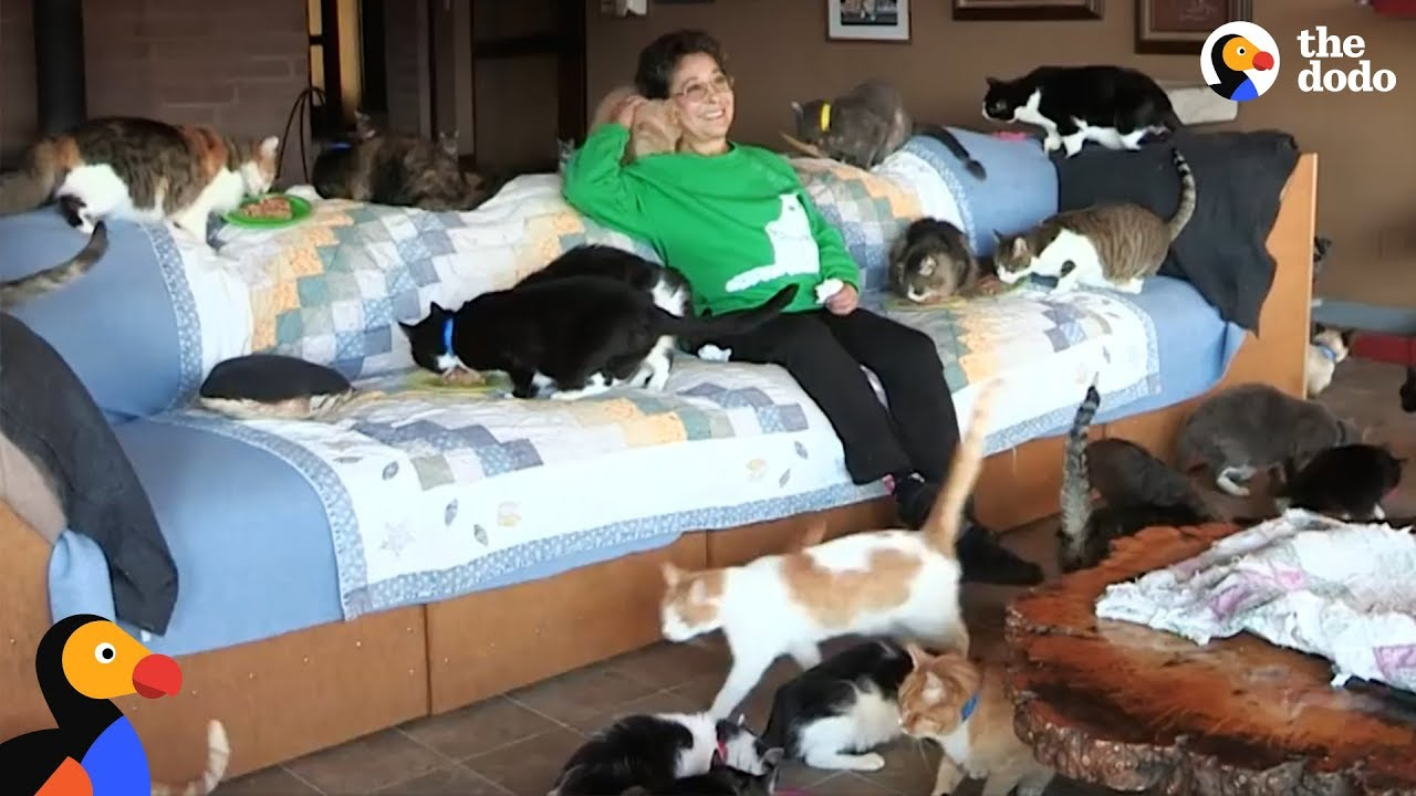 MOST EPIC CAT LADY: Woman Shares Her Home With Hundreds Of Rescue Cats