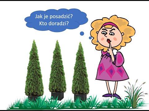 Download Jak sadzić tuje w ogrodzie?
