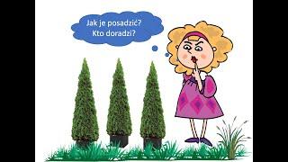 Jak sadzić tuje w ogrodzie?