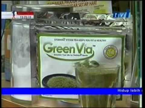 Stevia - Anda kini boleh dapatkan pokok ini walau dimana anda.