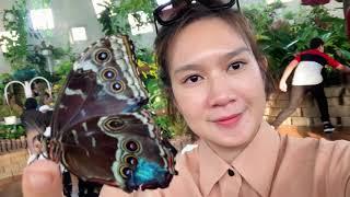 Tham Quan Ngôi nhà chung của 15000 con bướm tại DuBai cùng Gia Đình Lý Hải Minh Hà