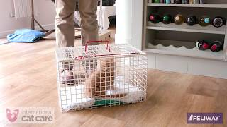 Getting your cat used to travel