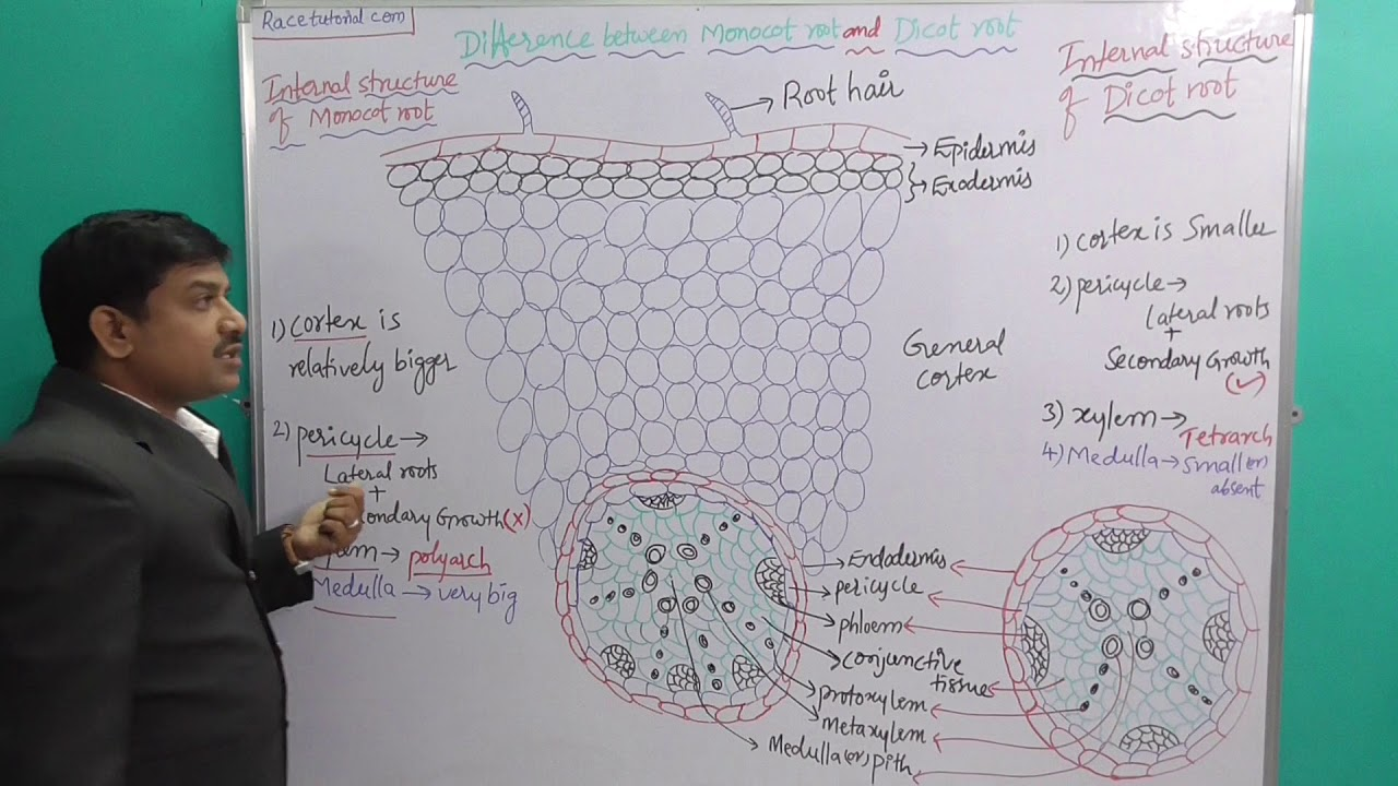 Difference between Monocot root and Dicot root Anatomy&Histology cnu
