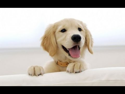 New Puppy Tips & Advice on Potty Training, Crate Training & More!
