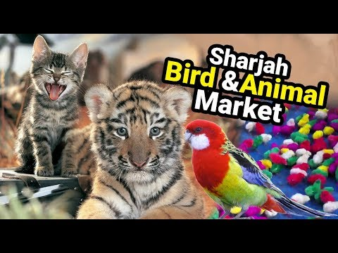 Biggest Animal & Birds Market Sharjah U.A.E.