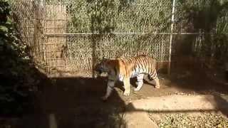 Zoo Majorca