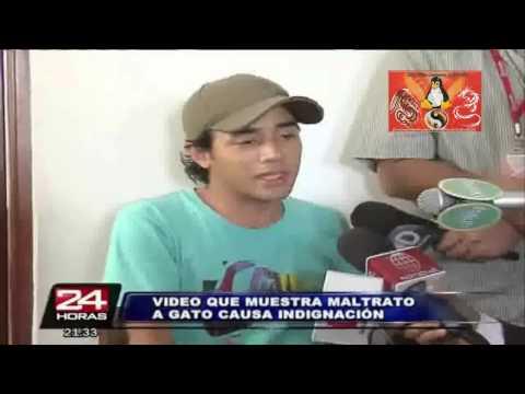 Documental Caso Tasahi EL Mata Gatos. No Al Maltraon Animal. Animales Con Derecho2/2