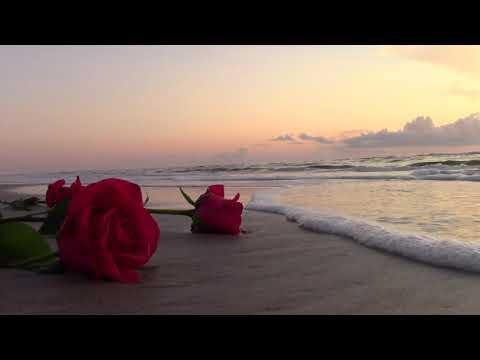 Memorial Roses On Beach. Daytona Beach Shores 7-3-18