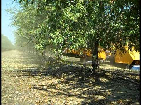 Day in Agriculture: California Almond Harvest