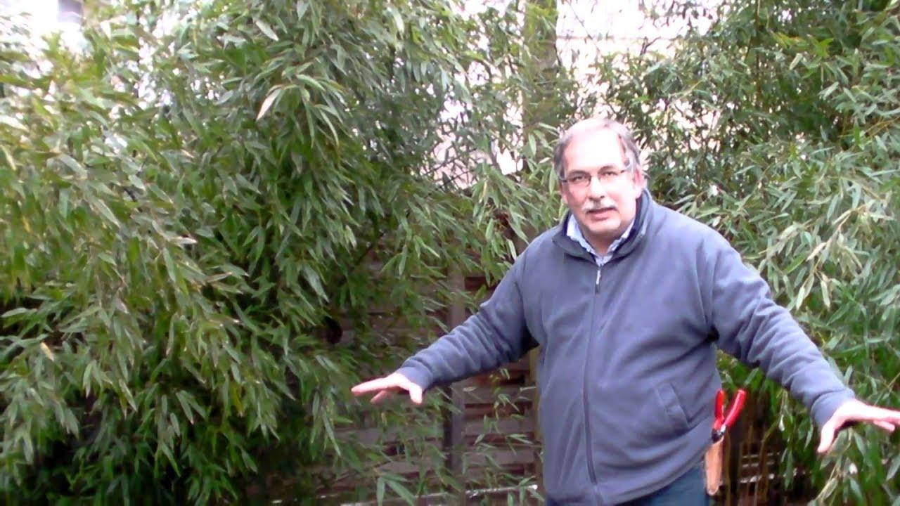 schneiden im garten 2011 herr inderkum 9v10 - bambushecke mit, Garten Ideen