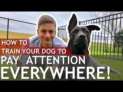 How to Train a Dog That Won't Pay Attention to You (Train a distracted dog)