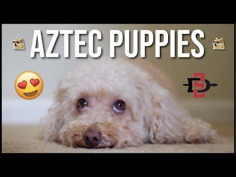 puppies-on-campus!!-|-sdsu-aztec-catholic-vlog-|-week-six-|-joseph-tabalon